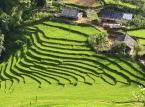 Ryż i ser dadzą zarobić więcej niż akcje. Fundusze hedgingowe polubiły egzotyczne rynki