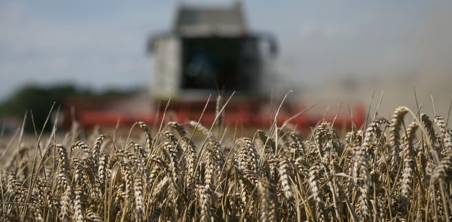 Zbiory pszenicy w Wielkiej Brytanii